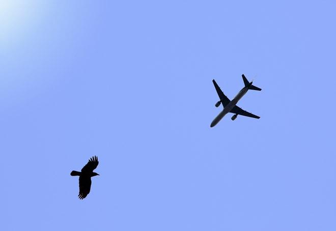 Светодиоды защитят от птиц